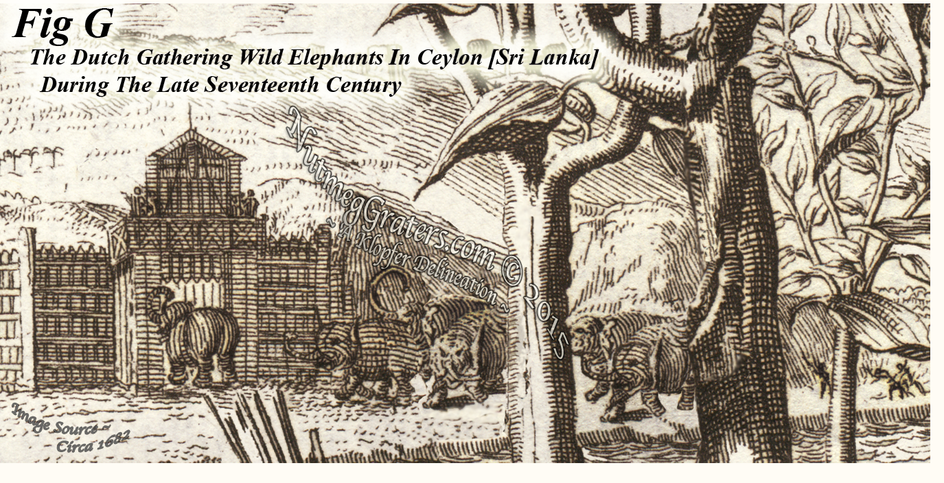 Gathering Herds of Elephants In Ceylon in 1682