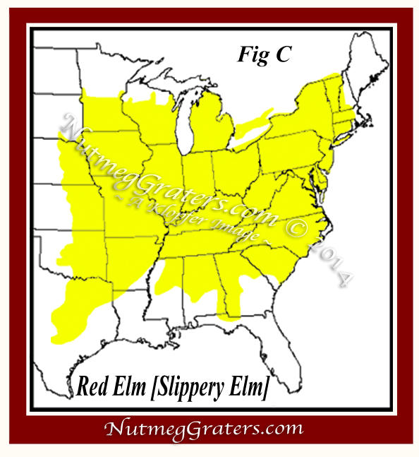 Red Elm - Slippery Elm in the U.S.A.